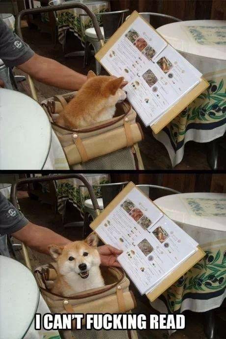 i like dogs - meme