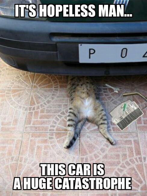 catastrophe - meme