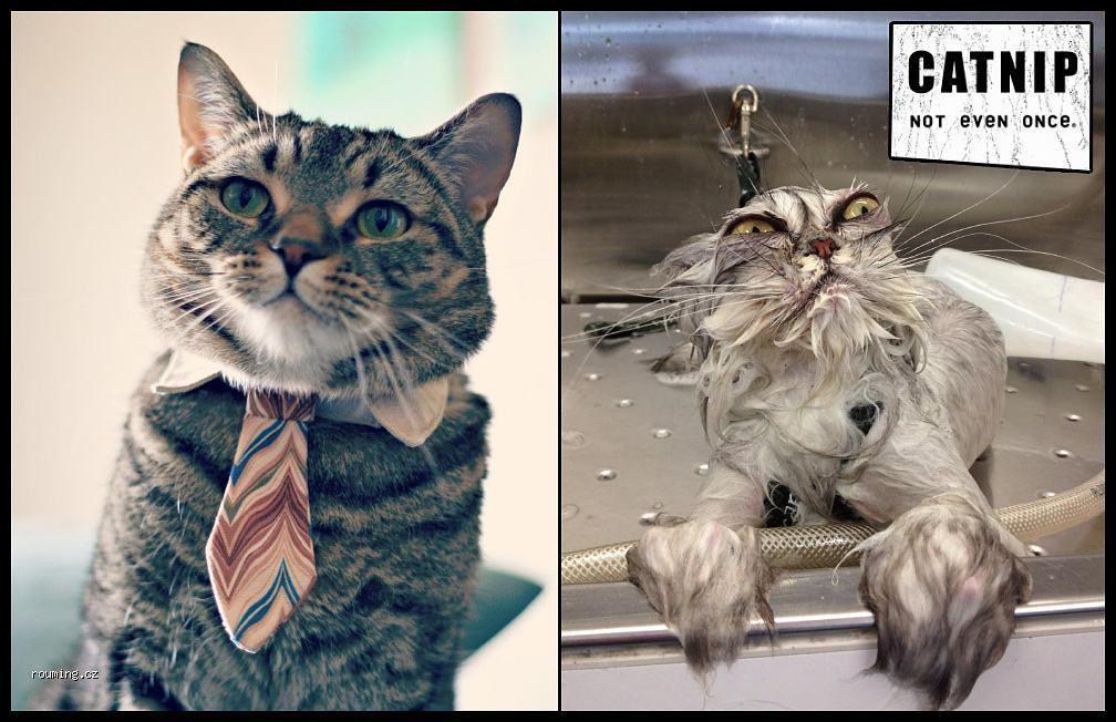 Catnip. Not even once. - meme