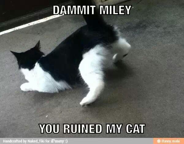 Twerk cat - meme
