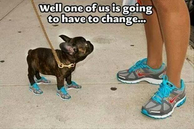 dogs & shoes - meme
