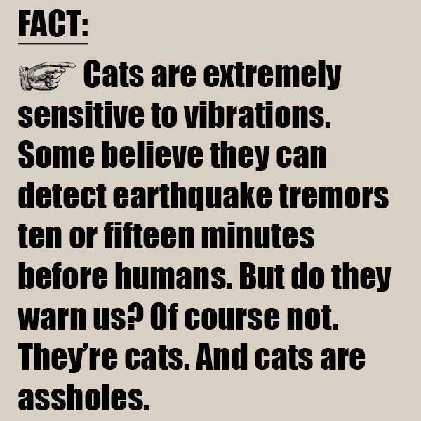 They're cats!! - meme